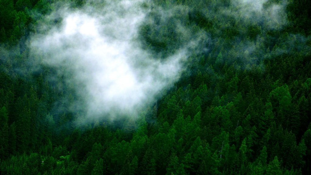 cloud floating low over forrest