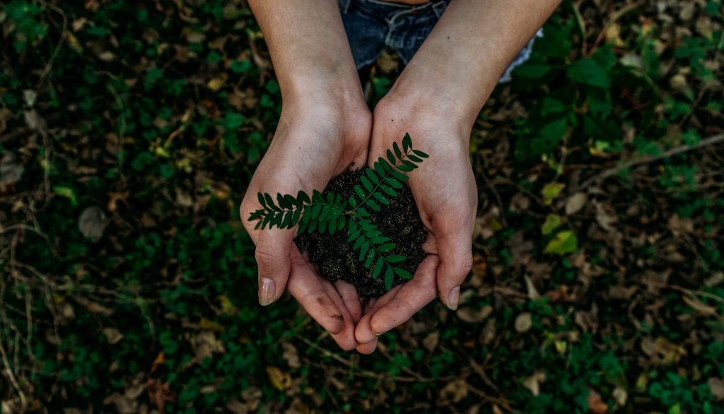 plant growing in hands